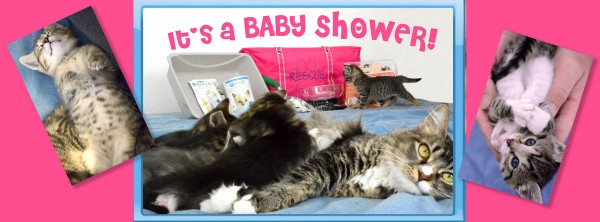 Kitten Baby Shower