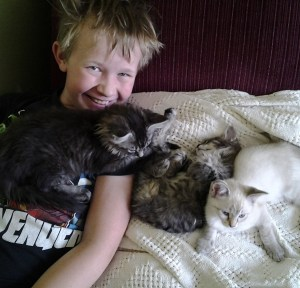 Will & his foster kittens