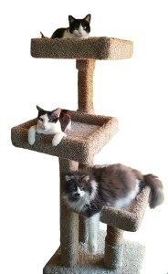 Cat Tree from Feline Furnishings
