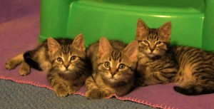 Hesperus, Guffy & Bandera @ Happy Cats