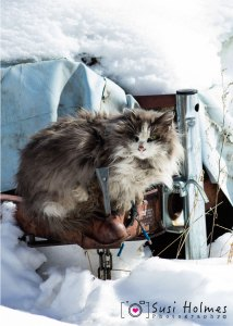 Community Cat in Winter