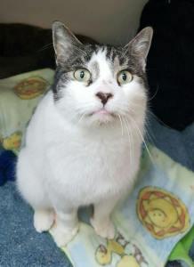Frank @ Happy Cats
