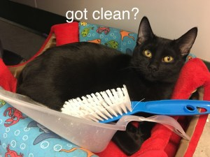 Gentle cleaners needed