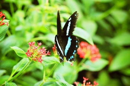 Exposition Sensational Butterflies - Londres