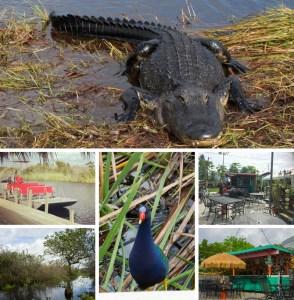 Everglades - Naples