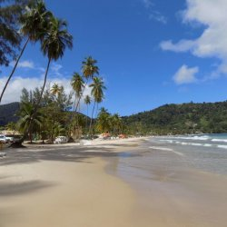 This photo shows the unspoiled beach of Maracas Bay, Trinidad, fringed with tall Palm trees and framed by a clear blue sky