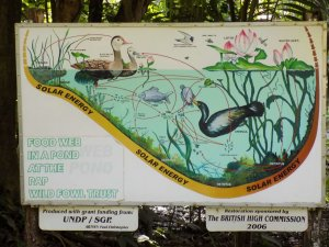 This picture shows one of the information boards displayed around the lakes at Pointe-a-Pierre Wildfowl Trust, Trinidad. This one describes the food web in a pond.