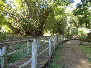 This picture shows wooden walkways surrounding one of the lakes at Pointe-a-Pierre Wildfowl Trust, Trinidad