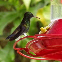 This photo shows a tiny green hummingbird perched on the edge of a feeder