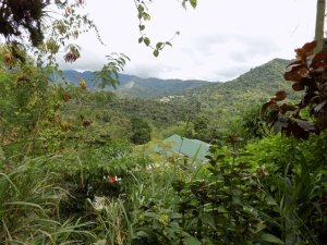 This picture shows the view of maracas Valley from Yerette
