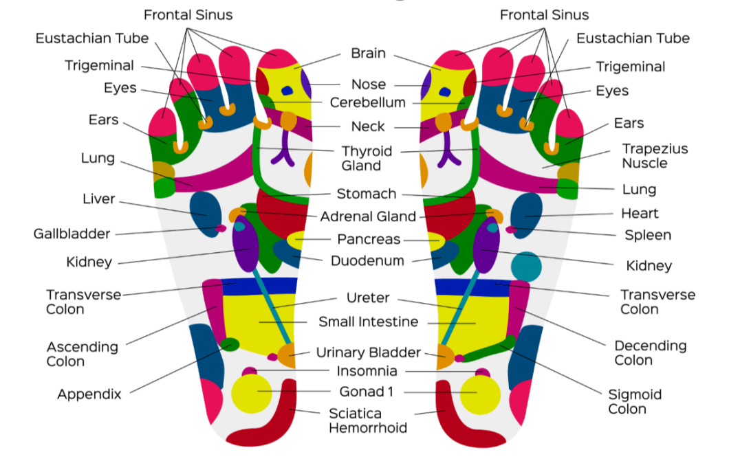 foot-reflexology-chart-and-sole-reflexive-zones