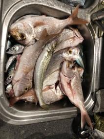 happy-fisherman-portarlington