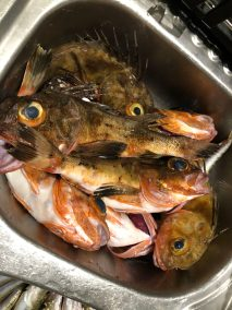 happy-fisherman-fishing-port-phillip-bay-mud-island