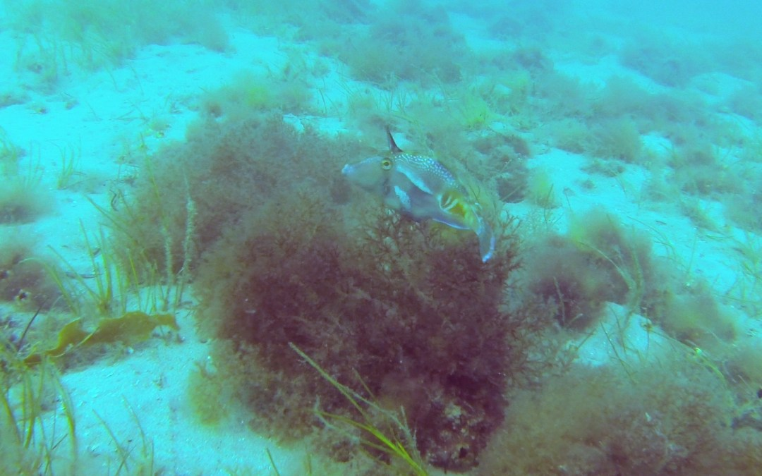 Under water video from St Leonards