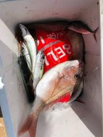 2019-nov-29-happy-fisherman-fishing-portarlington-02