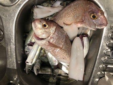 happy-fisherman-fishing-port-phillip-bay-snapper
