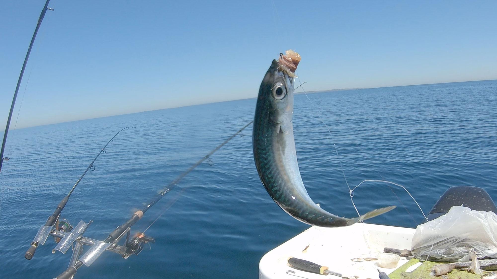 happy-fisherman-fishing-mordialloc