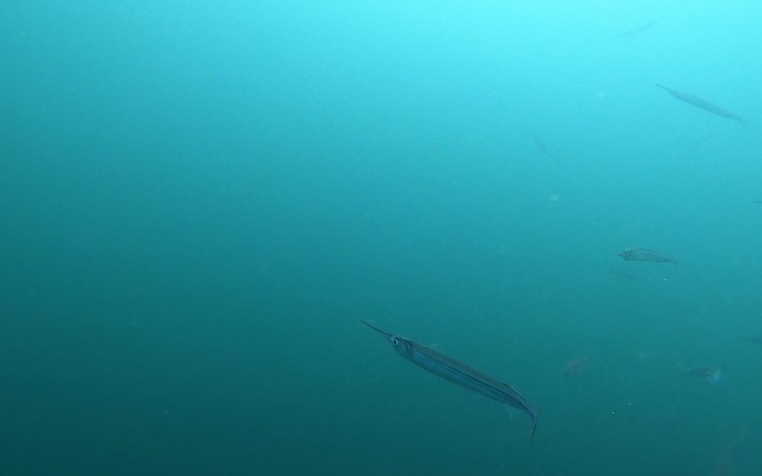 202 Dec 19th – Underwater video