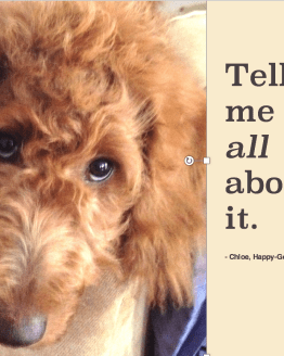 Red goldendoodle puppy's face with expressive eyes and quote by J. Carl