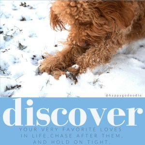 Close-up Red goldendoodle dog digging in snow for stick, inspirational quote on discover on blue backaground