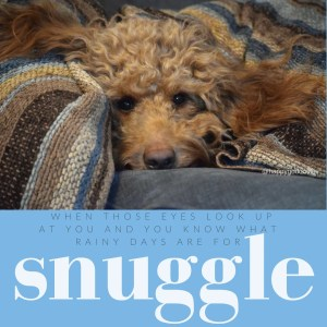 Close-up red goldendoodle face snuggled on couch with striped blanket, quote about rainy days and snuggling by j. carl
