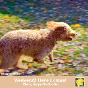 Action photo of red goldendoodle dog running with quote about weekend by j. carl