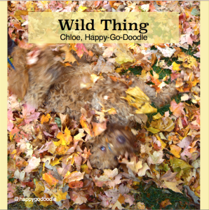 Red goldendoodle dog in a swirl of fall leaves..