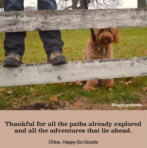 Red goldendoodle dog peeking through a wooden fence with adventure quote and hiker's shoes