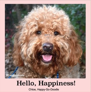 Red goldendoodle dog's face with a happy expression and title hello, happiness