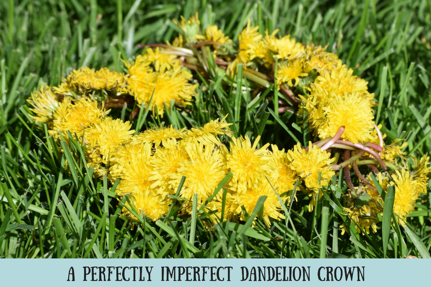 """Bright yellow dandelion crown on green grass and text reading """"a perfectly imperfect dandelion crown"""""""