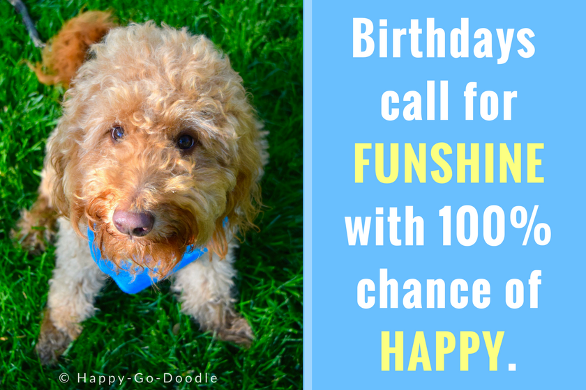 Red goldendoodle dog sitting on green grass and looking up with puppy dog eyes and happy dog birthday quote reads Birthdays call for funshine with 100% chance of happy