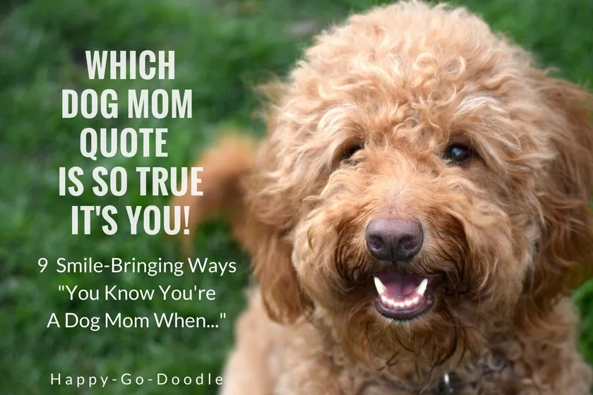 Red goldendoodle dog with title Which Dog Mom Meme is So True It's You! 9 Smile-bringing quotes