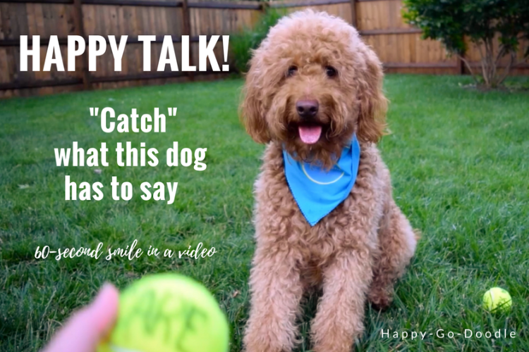 "It's impossible not to smile as this happy goldendoodle dog sits waiting for tennis ball to be thrown. Red goldendoodle dog is wearing blue bandana and sitting on green grass. A yellow ball is held in front of her. Title says happy talk ""Cath"" what this dog has to say"