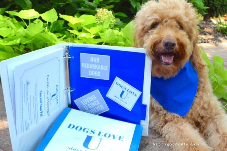 Dogs can get in the school spirit too at Dogs Love U as this goldendoodle dog shows off her Dogs Love U school certificate and binder