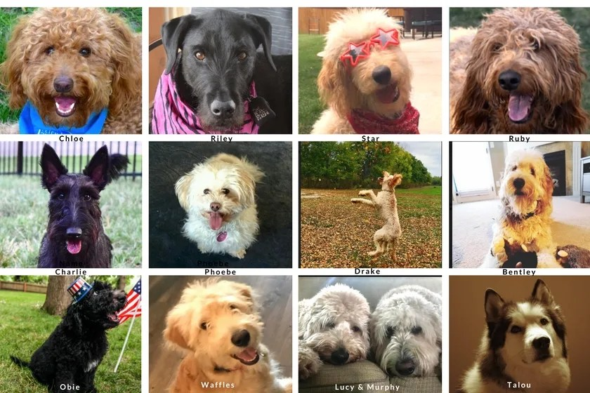 Dogs from the first Dogs Love U Photo Contest with Happy-Go-Doodle Chloe and dog friends in a yearbook style format