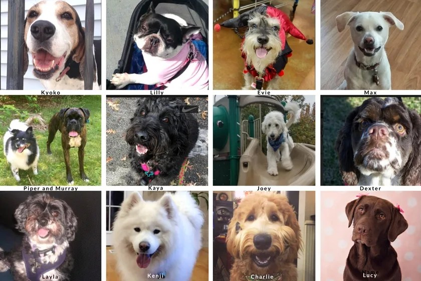 Dogs who entered the first Dogs Love U Photo Contest with all pictures of all kinds of dogs composed in a yearbook style format These dogs are the rebarkable dogs in the class of 2017