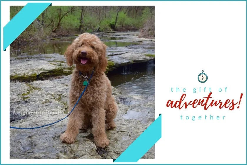Red goldendoodle dog sitting on rock by creek and gift ideas for dog owners that are for adventures together