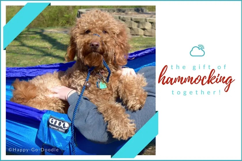 Red goldendoodle dog in blue ENO hammock and title the gift of hammocking together