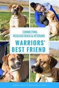 Warriors' Best Friend Connecting Rescued Dogs & Veterans