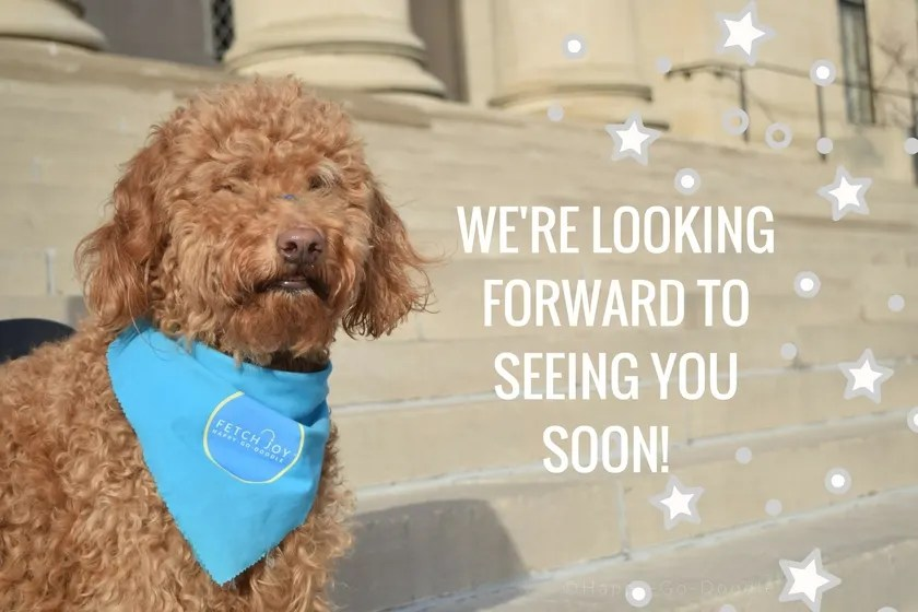 We're looking forward to seeing you soon with Red goldendoodle dog