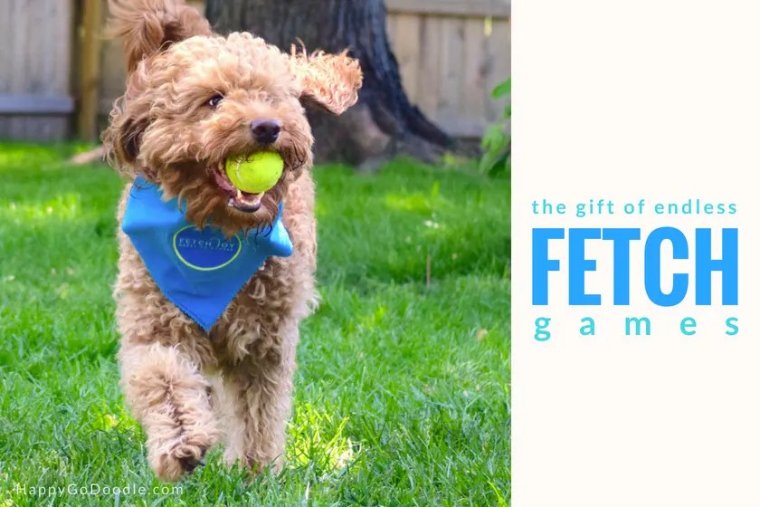 Red goldendoodle dog with yellow ball and title the gift of endless fetch games