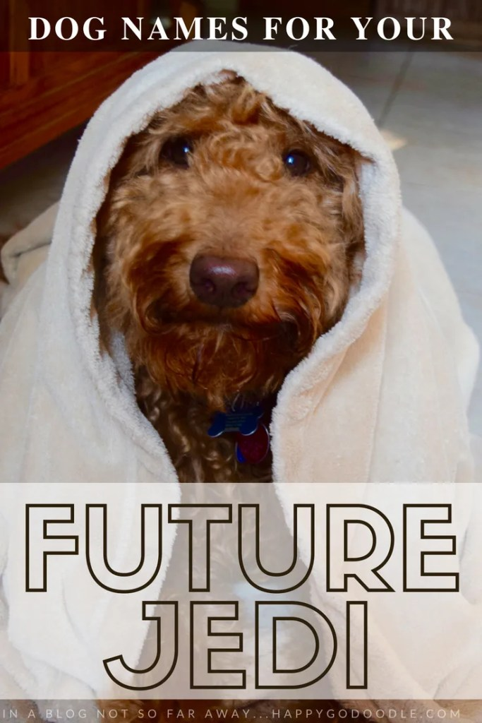 Red goldendoodle dog and title Goldendoodle dog names for your future Jedi and In a dog blog not so far away at happygodoodle.com