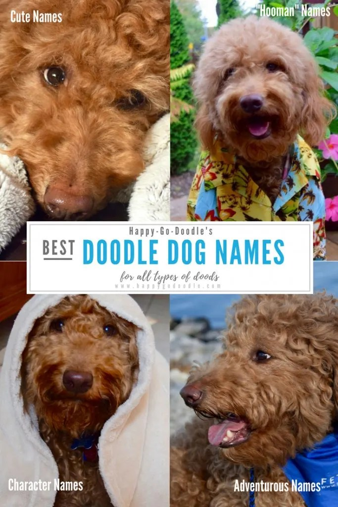 collage of red goldendoodle dogs and title best goldendoodle dog names for all types of doods and subtitles cute names and hooman dog names and character names and adventurous goldendoodle dog names