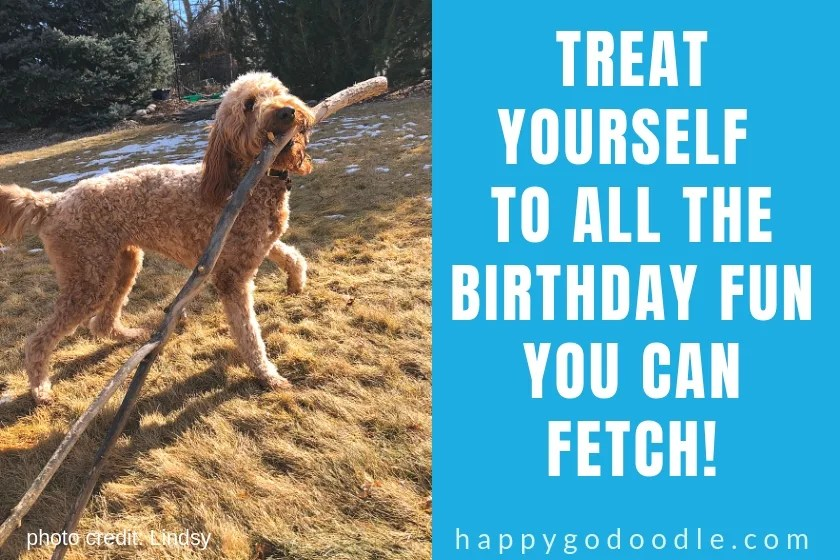 dog birthday meme with photo of dog carrying giant stick and caption about treating yourself