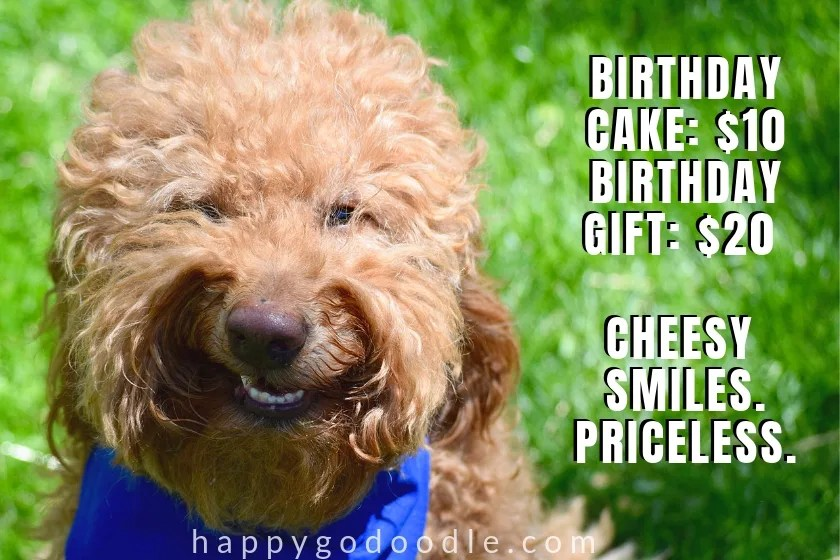 funny dog birthday meme with funny dog face photo