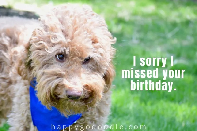 caption sorry I missed your birthday and sad dog face photo