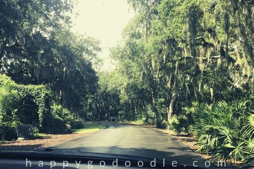Tree-lined road in Amelia Island Florida