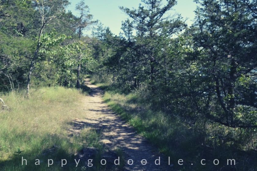 photo of a nature trail