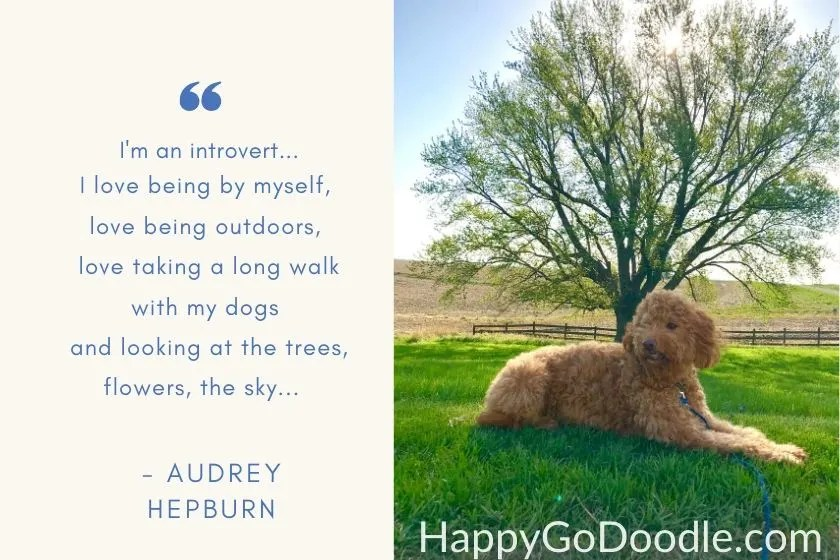 dog sitting under huge shade tree on a sunny day and quote by a. hepburn about being an introvert and loving the outdoors. photo.