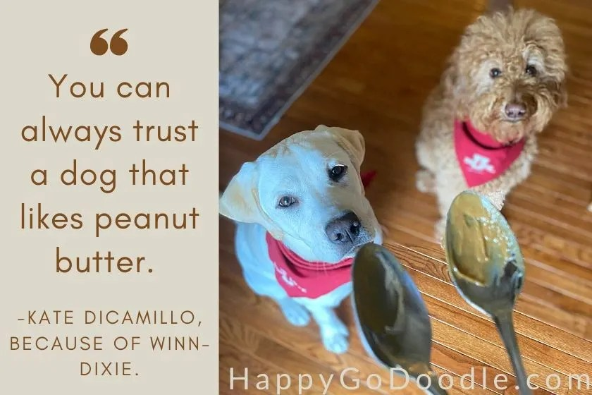 Goldendoodle and Labrador retriever puppy looking wistfully at peanut butter on spoons with quote about peanut butter. photo.